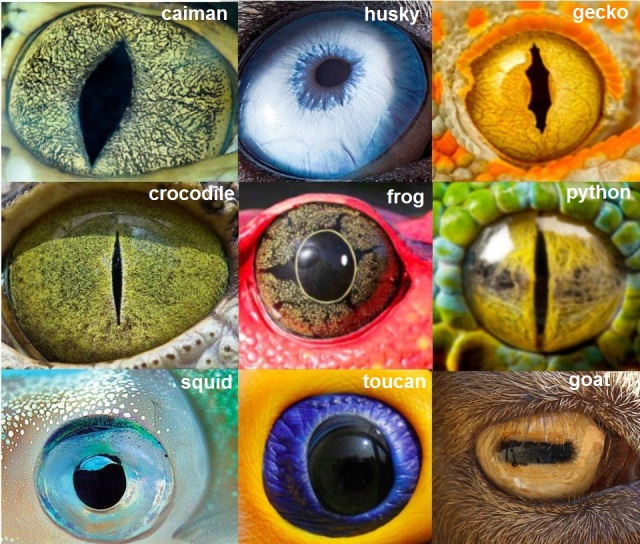 eyes of animals
